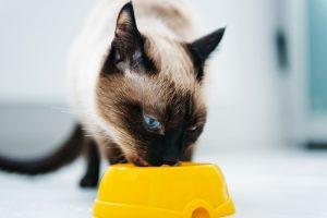 cat eating pet food
