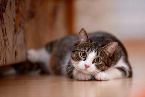 Striped with white a cat. Striped not purebred kitten. Small predator. Small cat.