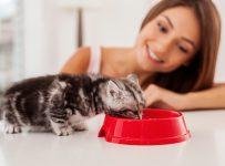 Katzenfutter im Test - auf Schadstoffe achten!